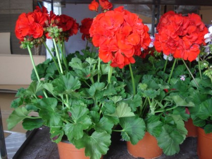Viveros a m floristerias for Viveros en murcia