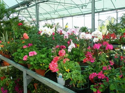 Dise o de jardines en valencia botanic cullera floristerias - Jardineria en valencia ...